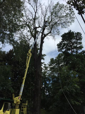 Tree Service Oxford MS
